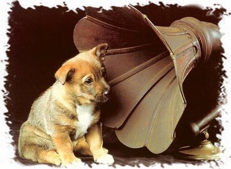 какую музыку слушают животные
