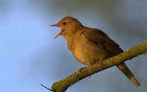 Исследователи птиц доказали - музыка влияет на размножение особей