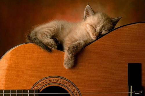 как музыка влияет на животных