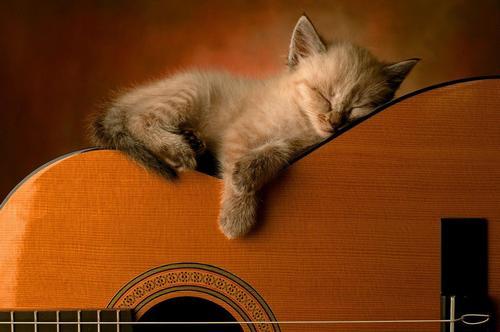 Несколько фактов влияния музыки на животных